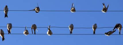 Birds on the line